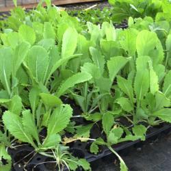 Découvrez nos plants potagers