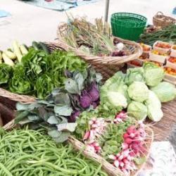Agriculture Naturelle, certifiée biologique